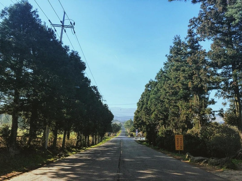 Itinerary Tur ke Pulau Jeju 7D6N - Mysterious Road