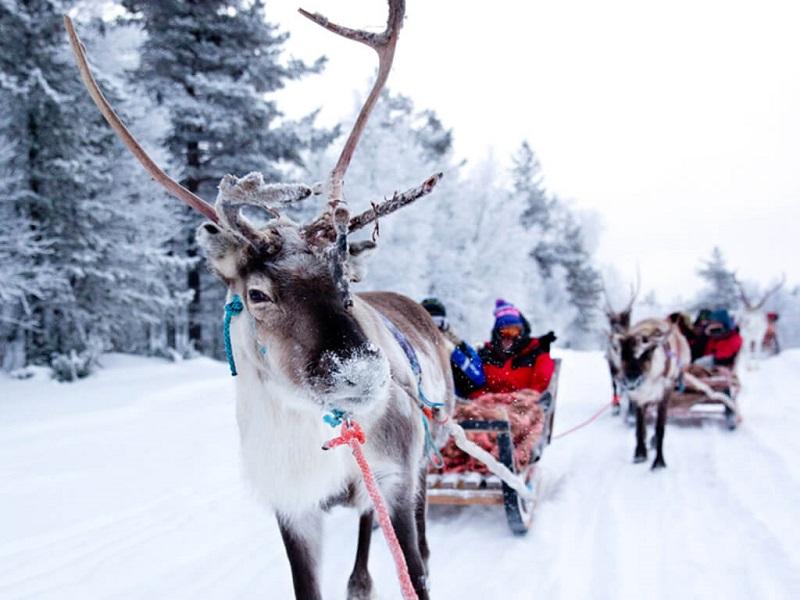 Aktivitas Seru Saat Liburan Musim Dingin di Eropa - Naik Reindeer Sleigh Ride