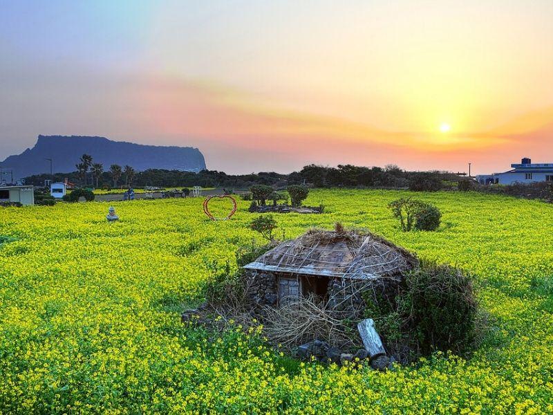 Tempat Terbaik untuk Liburan Akhir & Tahun Baru di Asia - Jeju Island Korea - Sumber Pixabay