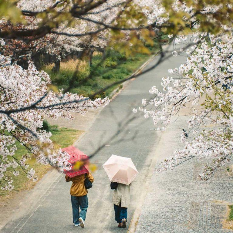 Pembagian Musim di Jepang Berdasarkan Bulan - Sumber Unsplash