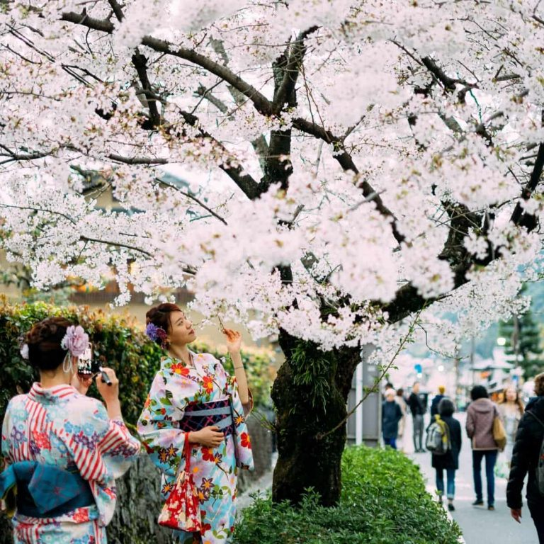 10 Tempat Terbaik Melihat Bunga Sakura di Tokyo, Jepang (2020) - Sumber Unsplash