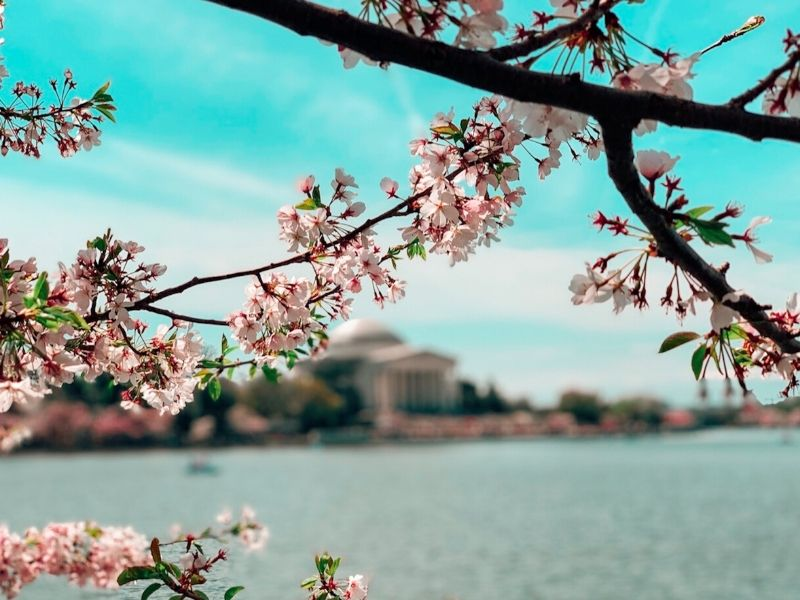 Washington DC Jefferson Monument, Amerika Serikat - Sumber Pexels
