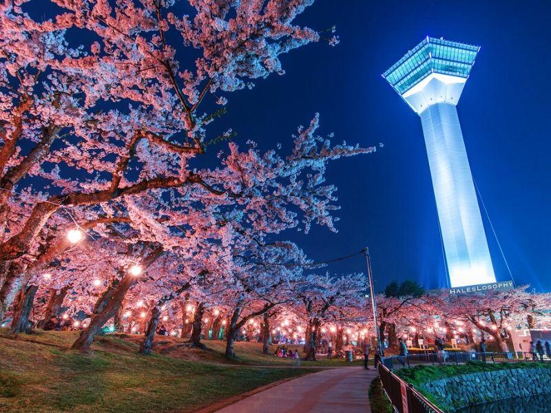 Goryokaku Tower, Hakodate, Jepang - Sumber Flickr