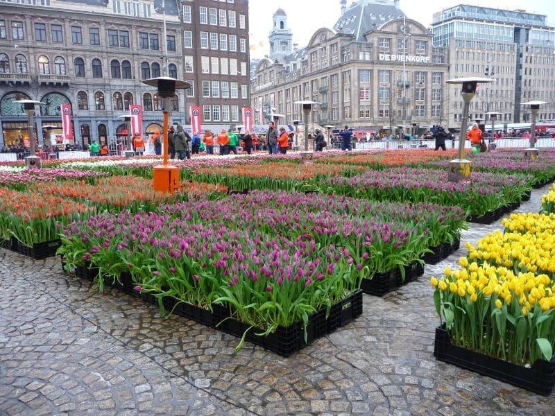 Taman Bunga Tulip - Dam Square, Belanda - Sumber Wikipedia