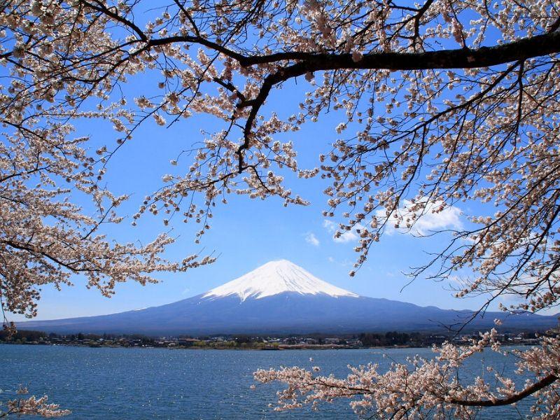 Sakura di Gunung Fuji - Sumber: Flickr
