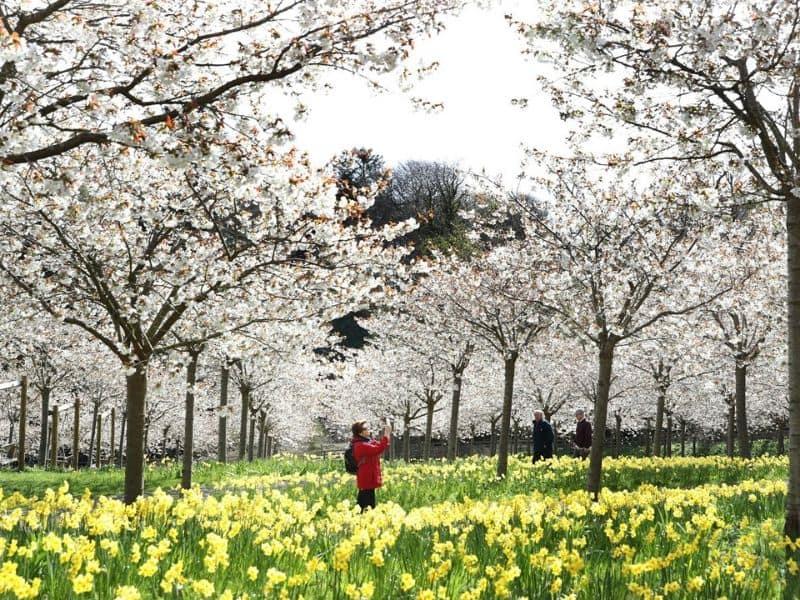Alnwick Gardens, Inggris - Sumber: Chronicle Live