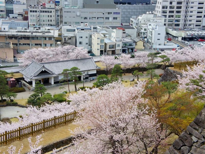 Prediksi Bunga Sakura Mekar di Maizuru Park, Fukuoka - Sumber Wikimedia