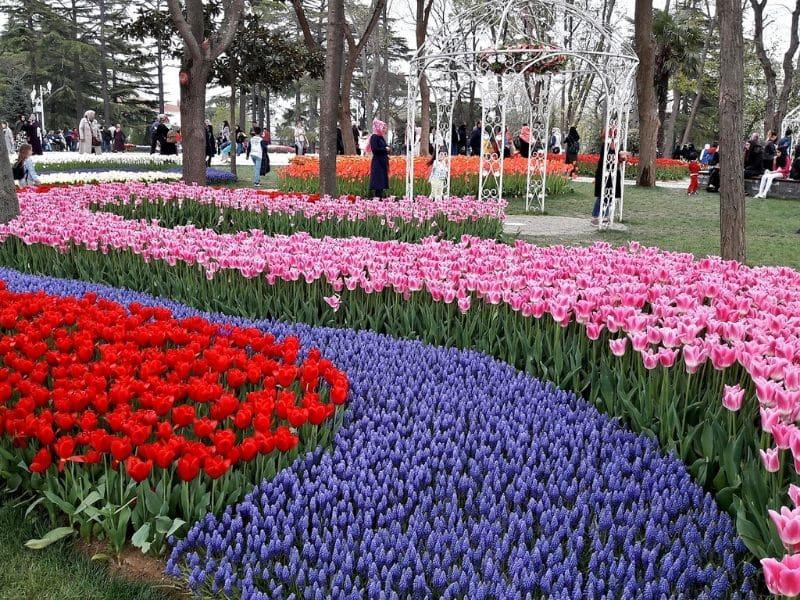 Tempat Terbaik Melihat Bunga Tulip - Emirgan Park, Turki - Sumber Needpix