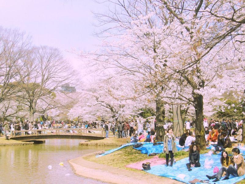 Taman Yoyogi Koen - Sumber: Flickr