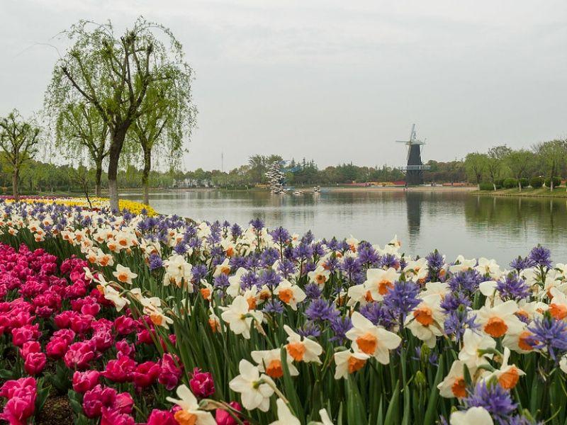 Tempat Melihat Tulip di Asia - Shanghai Flower Port, China - Sumber Flickr