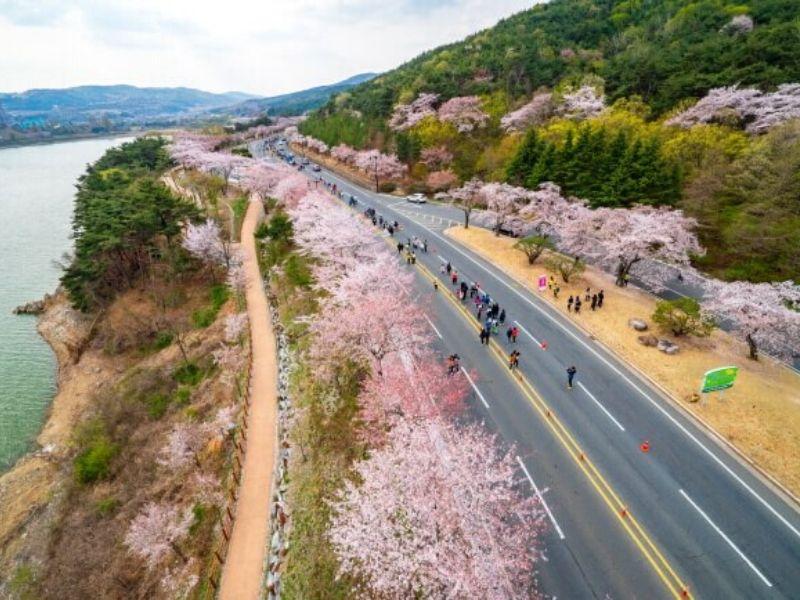 Gyeongju Cherry Marathon - Sumber: Visit Korea