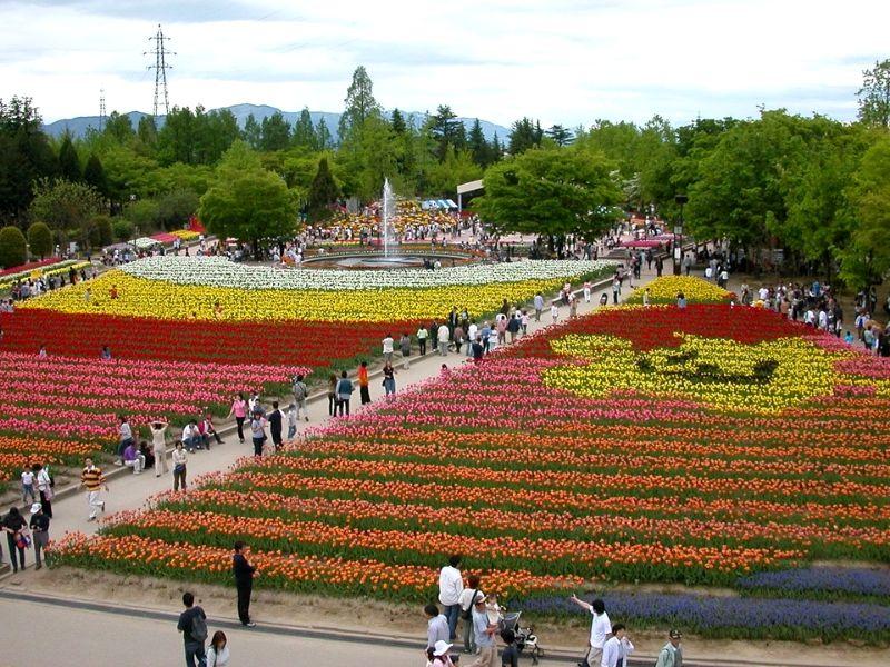 Negara untuk Melihat Bunga Tulip - Tonami Tulip Fair, Jepang - Sumber Wikipedia