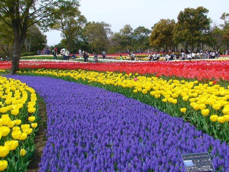 Tulip di Jepang - Kiso Sansen Tulip Festival - Sumber Needpix