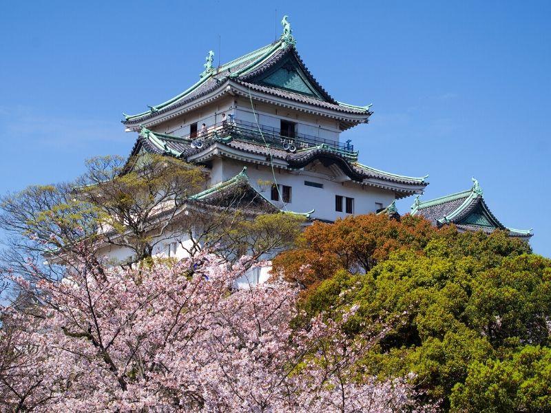 Sakura di Wakayama-jo Castle, Jepang - Sumber Wikimedia