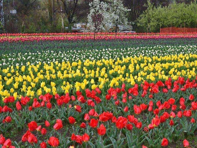 Indira Gandhi Garden, India - Sumber Wikimedia