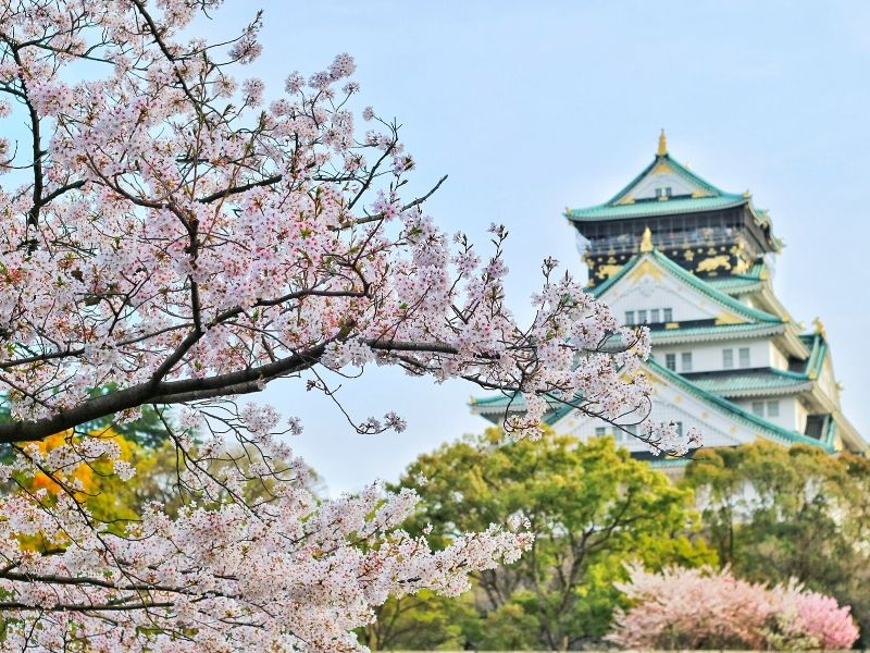 Bunga Sakura di Osaka Castle, Jepang