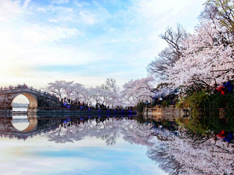 Paket Tour Sakura China - Yuantouzhu Cherry Blossom