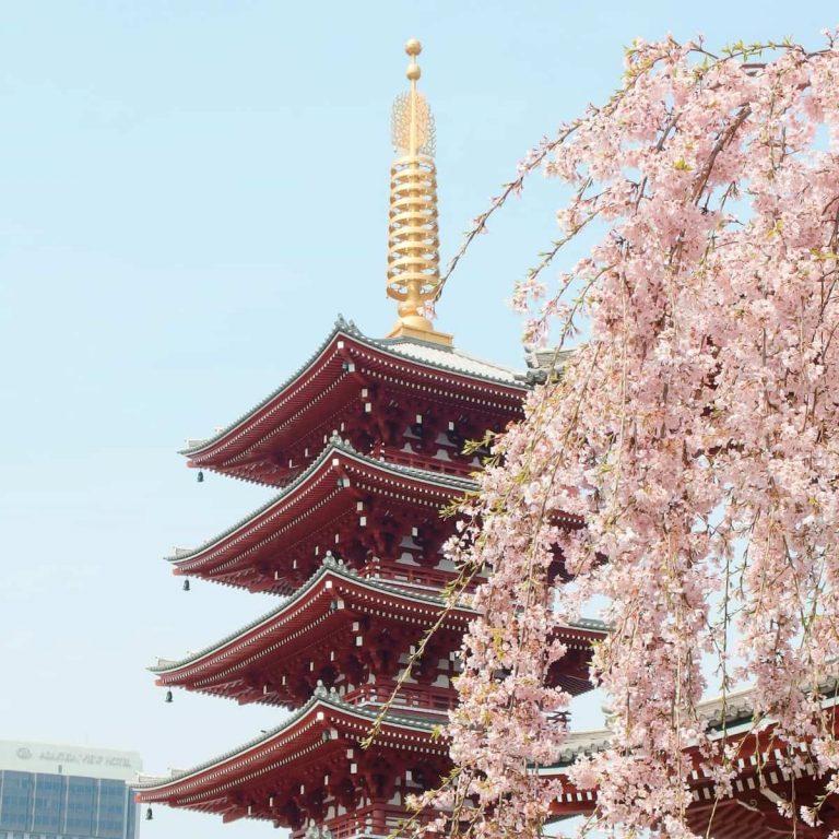 Panduan Itinerary Menikmati Musim Sakura di Jepang Tahun 2020 - Sumber Unsplash