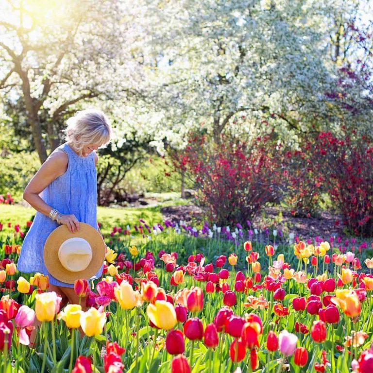 Tempat Terbaik Melihat Festival Taman Bunga Tulip di Dunia - Sumber Pexels