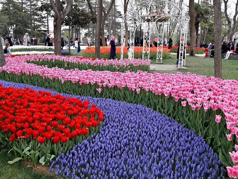 Melihat Tulip di Turki - Emirgan Tulip Gardens - Sumber Pixabay