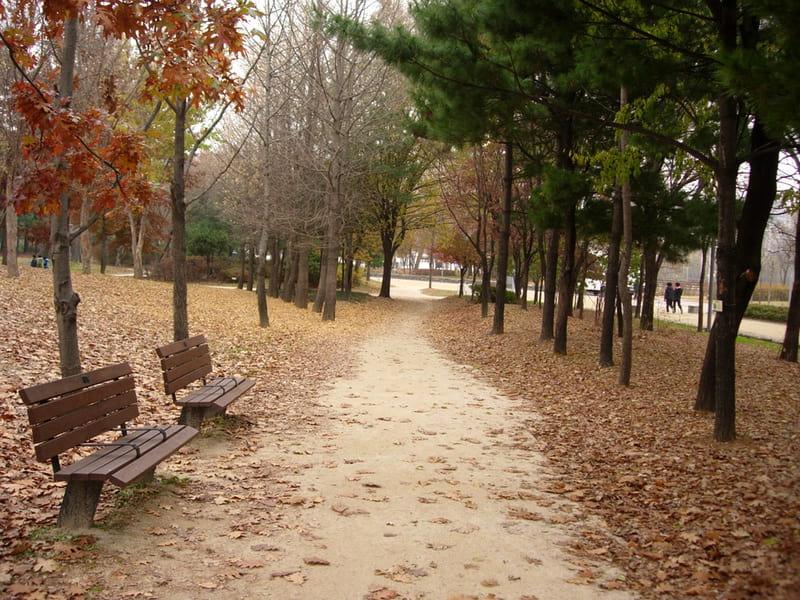 Wisata Alam Seoul - Seoul Forest - Sumber Wikimedia