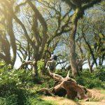 10 Rekomendasi Wisata Domestik di Pulau Jawa yang Bikin Jatuh Hati