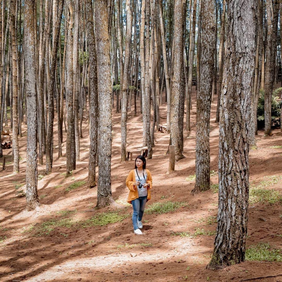 Hutan Pinus Mangunan Bantul Yogyakarta - Instagram syasyaarisya